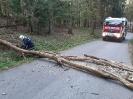 Baum über Straße Rothmayrberg_1